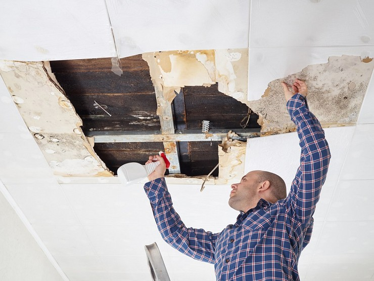 Mould Removal Attic Burlington